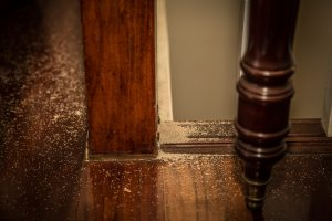 Termite Inspections Hudson County NJ